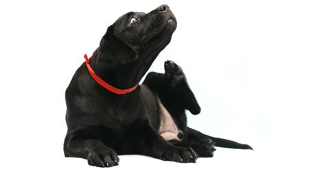 פרעןשים אצל כלבים