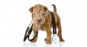 חיסון נגד מחלת הכלבת