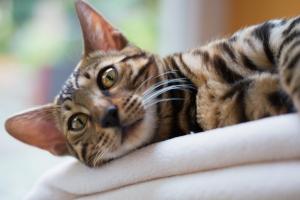 מחלות חתולים בדרכי השתן