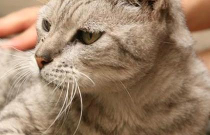 החתולים שלכם הגאווה שלנו