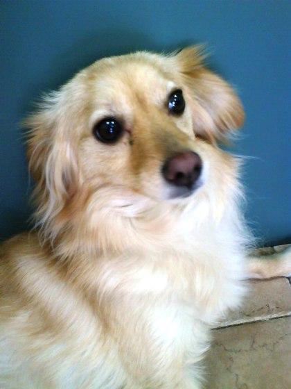 עיקור וסירוס כלבים