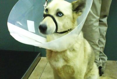 הכלבים שלכם הגאווה שלנו
