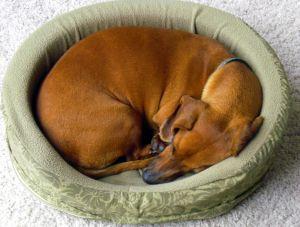 מיטות כלבים
