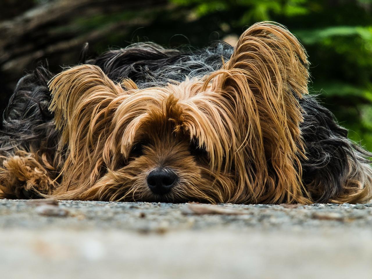 טיפול בקרציות אצל כלבים / גורי כלבים