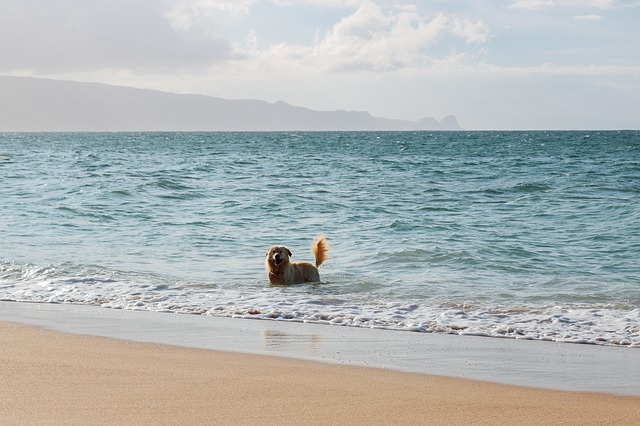 חיסונים לכלב- להקפיד גם כשהולכים לים
