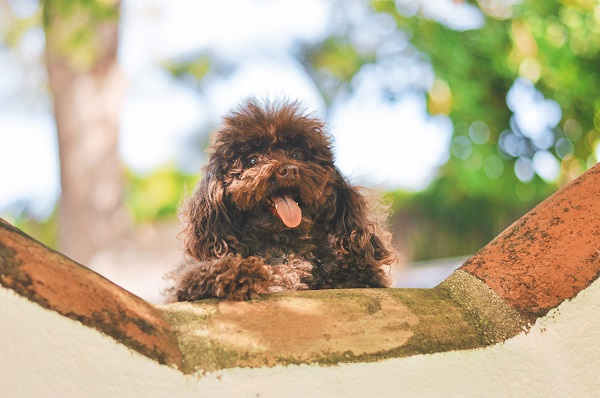 גור כלבים חדש - חינוך לצרכים