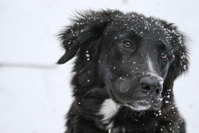 הכנת הכלב והחתול לחורף