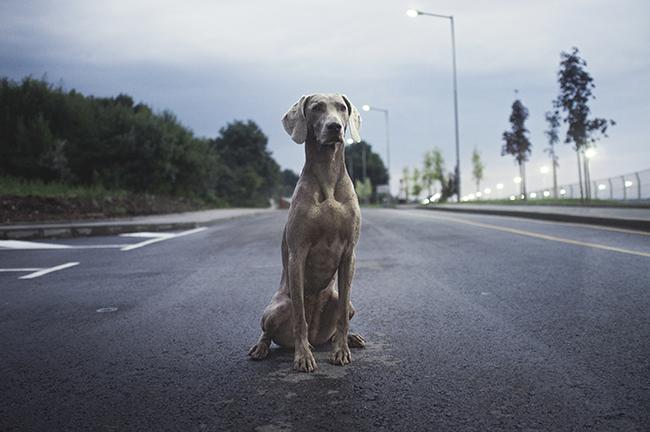 סירוס כלבים מונע כלבים נטושים