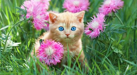 גור חתולים חדש בבית