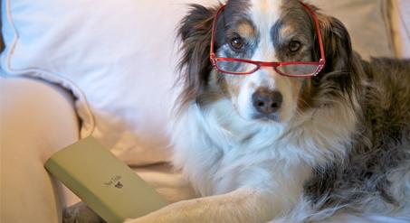 טיפול בכלבים מבוגרים
