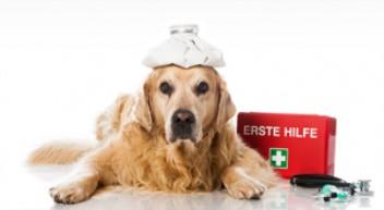 הקשר בין שעלת אצל כלבים לחיסונים