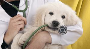 רפואה פנימית ושירותי מעבדה לחיות מחמד