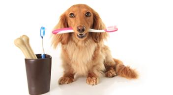 """רפואת שיניים לכלבים וחתולים - וטרינר בשרון ד""""ר די"""