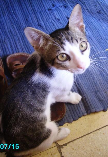 טיפול בחתול