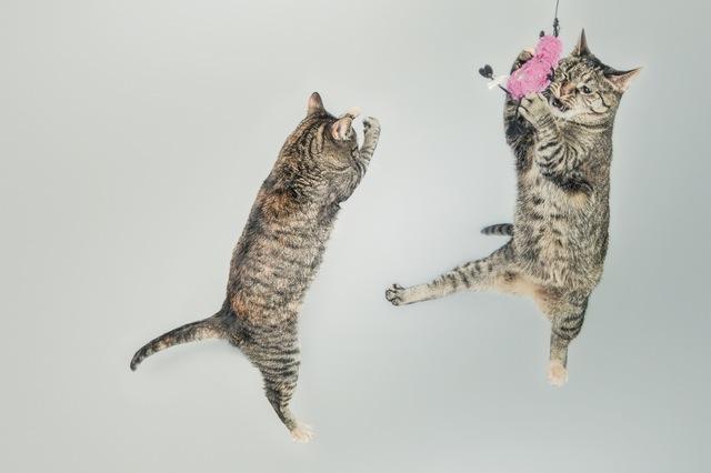 חיסון נגד כלבת - גם לחתולים